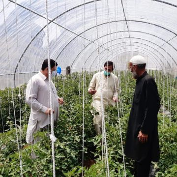 FAO continues its support the farming community in tribal districts of KPK