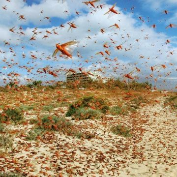 Overall situation According to details released by National Locust Control Center
